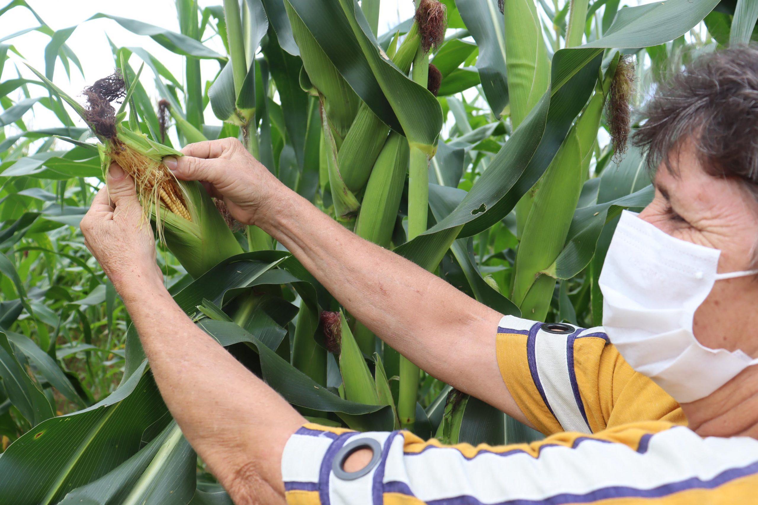 Projeto agrícola da Cenibra produz 100 toneladas de alimentos por ano